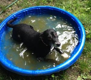 Suze pool