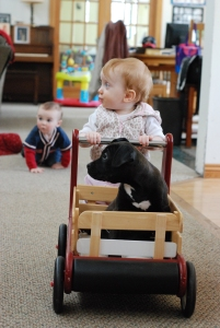 babies and puppy