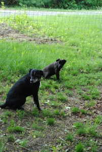 daisy buddies